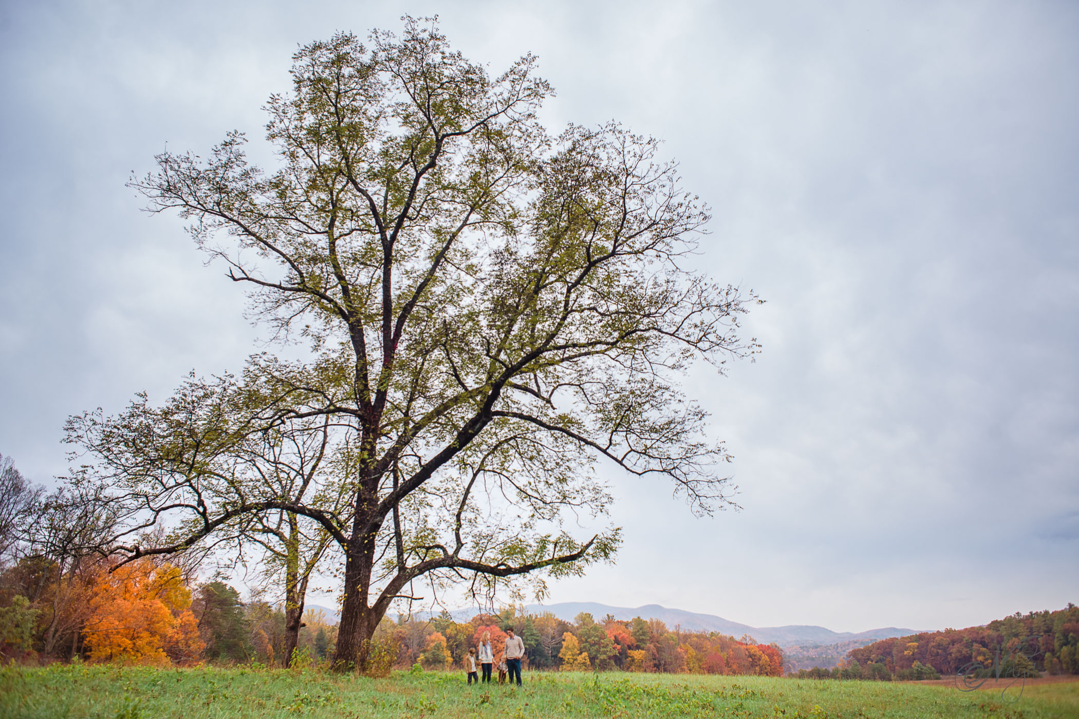 Tennessee fall family photos_6