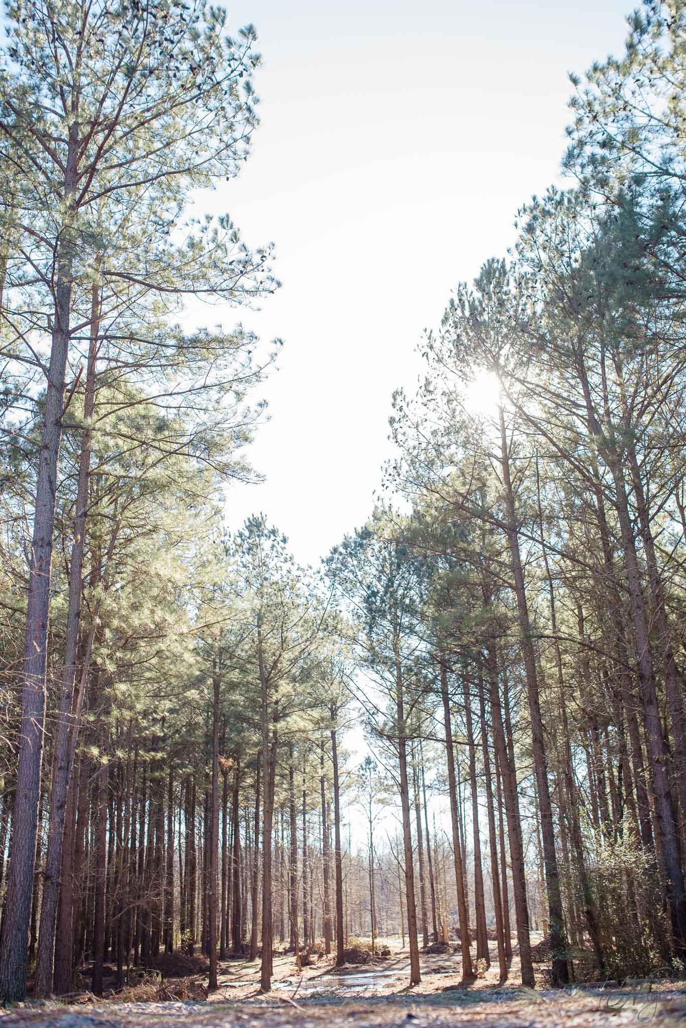the pines at hiwassee river weddings-1339