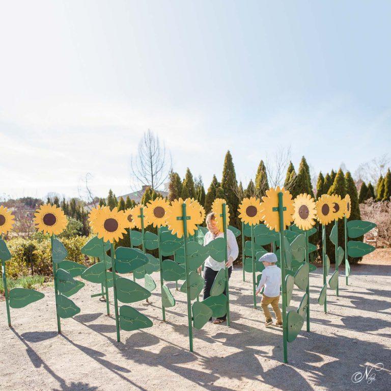 sunflower maze at Huntsville botanical kids garden