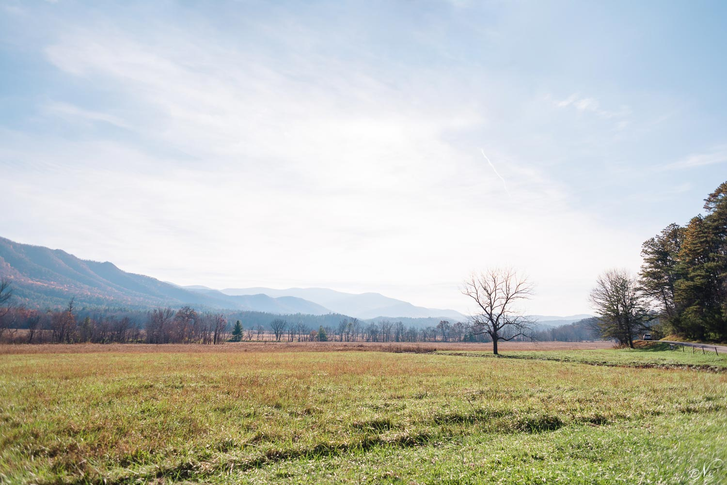 cades cove view of open field and bare tree near Hyaat LN