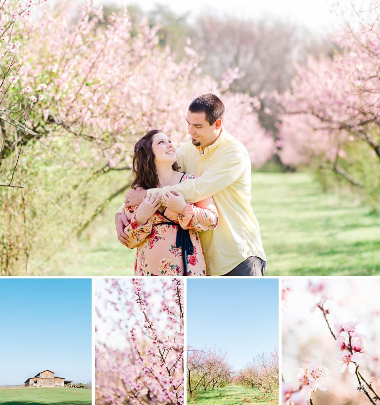 Peach blossom maternity session in the orchard at The Barn at Drewia Hill