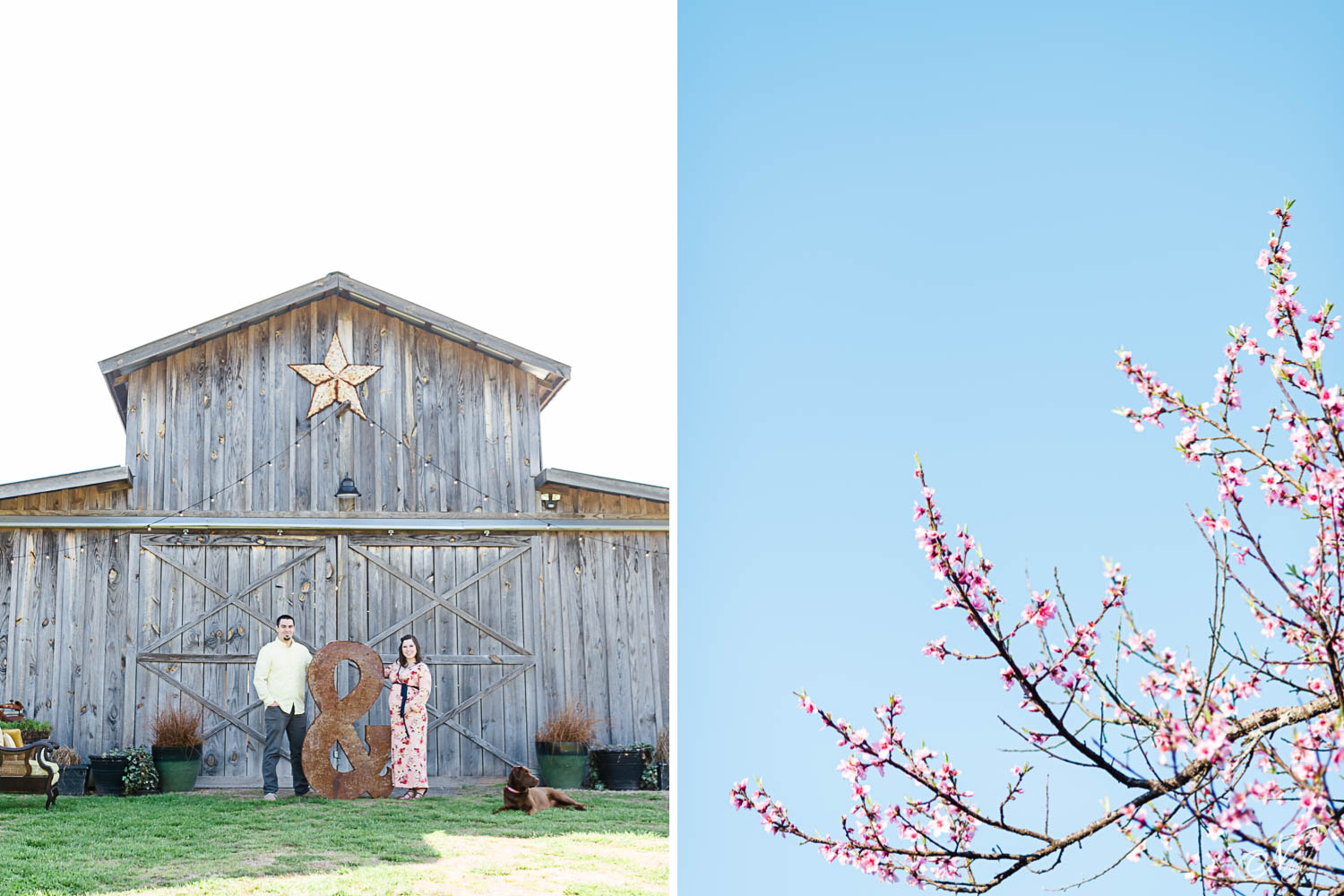 couple standing in front of barn with big rusted metal ampersand . and peach blossoms and blue sky.