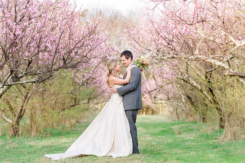 girl inwedding dress and guy in gray/blue suit under peach blossoms in Tennessee