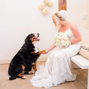 bernice mountain dog shaking paws with bride in the wedding dress in tennessee