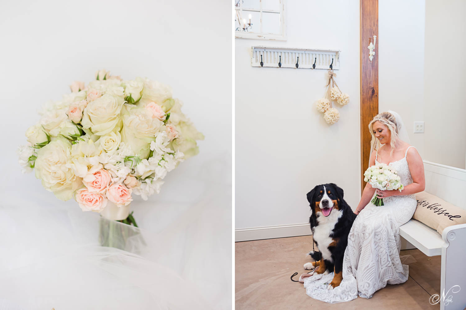 white and pink rose bouquet. And Bride sitting on bench with her black and white dog