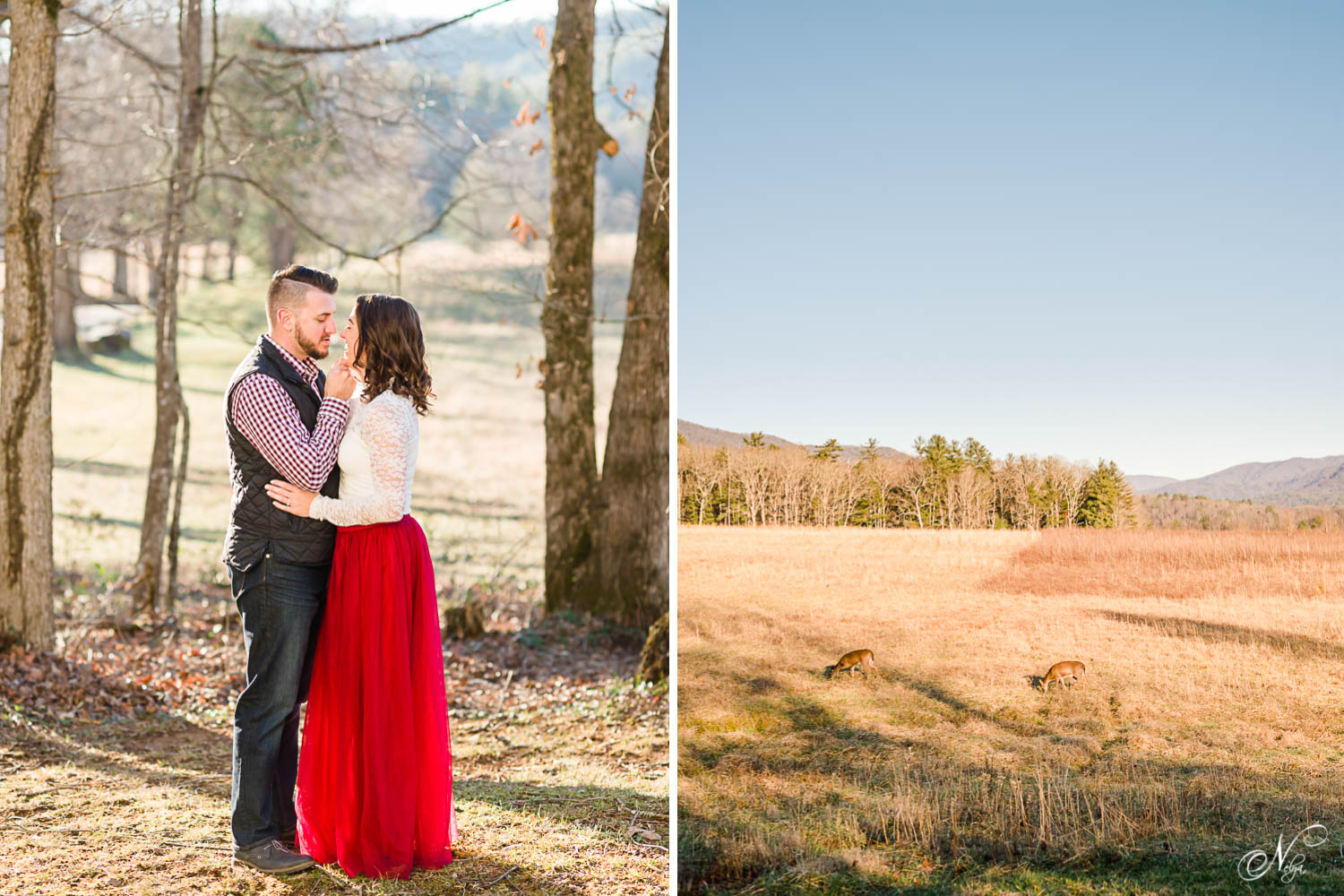 prewedding photos of engaged couple outdoors in january in the mountains of Tennessee. And random deer just eating grass in the winter.