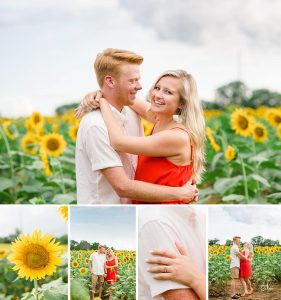 Ooltewah Sunflowers Engagement photos