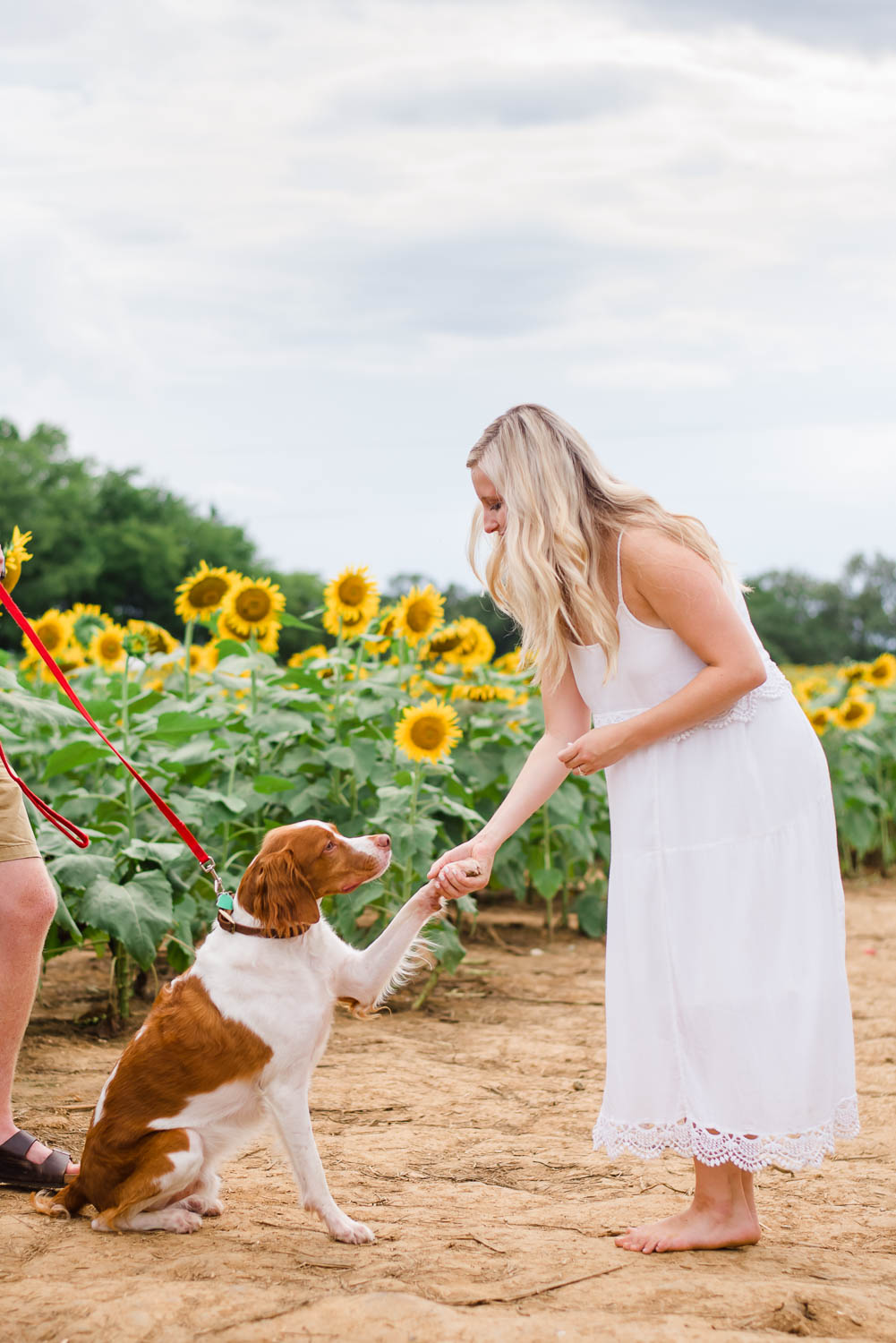 dog shaking the hand of a girl in white sundress