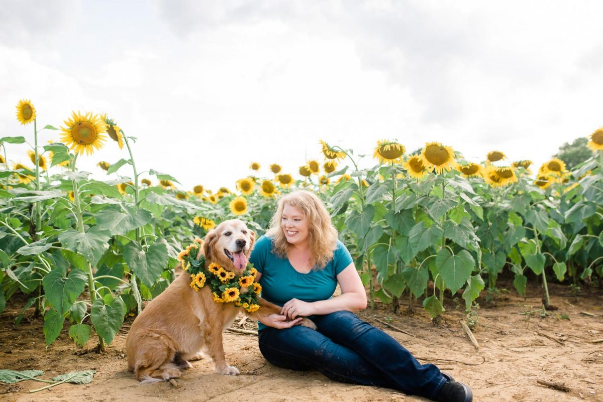 one person and brown dog in sunflower field