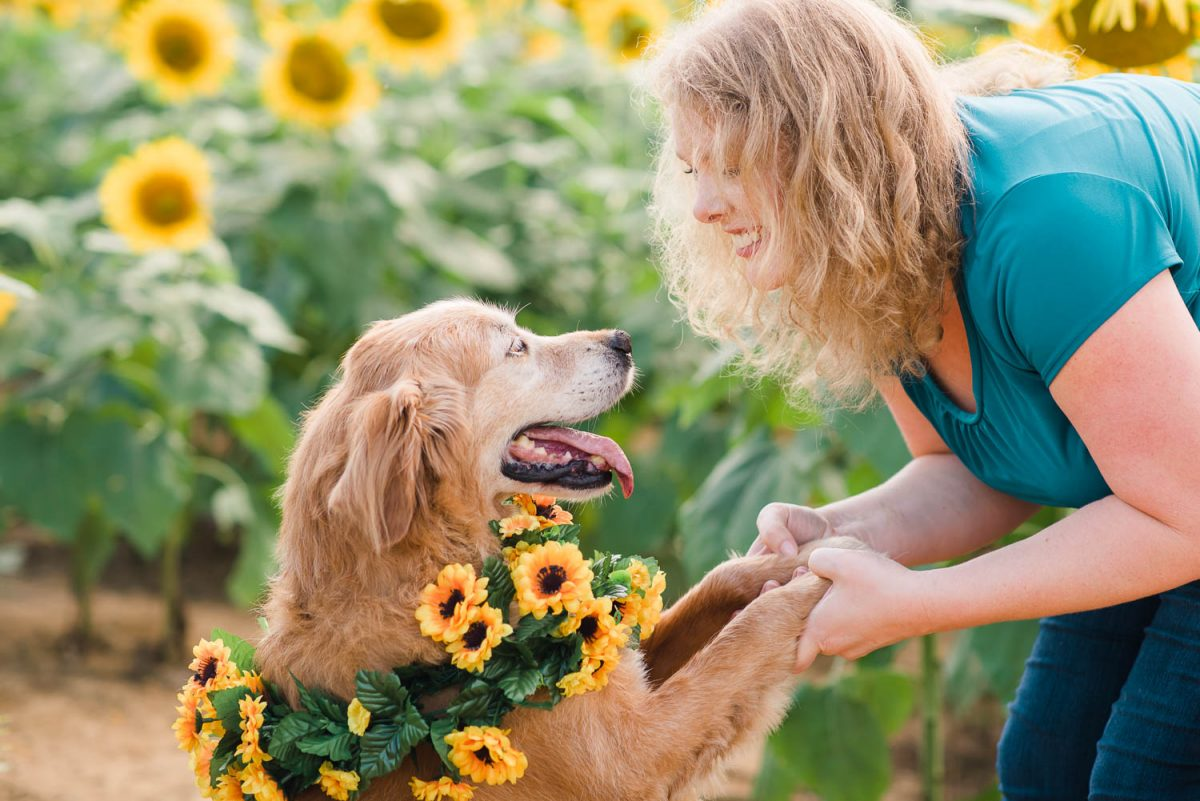 dog and person outside in sunflower field in TN