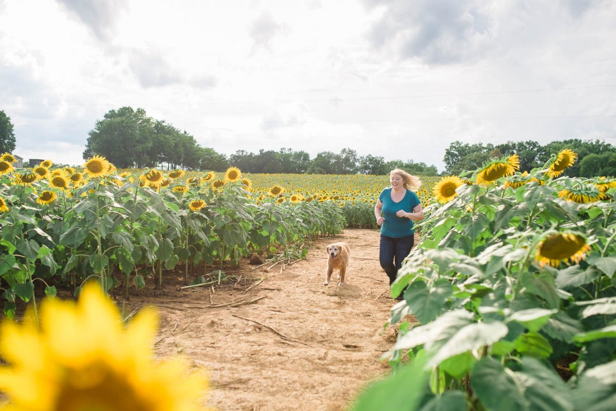 person and a dog running in a sunflower field