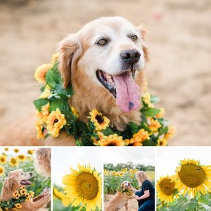 Adorable sunflower and dog photos | Ooltewah TN