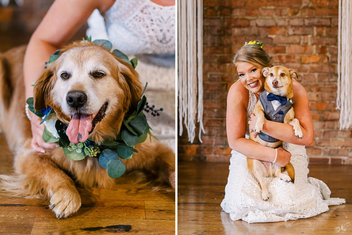 golden retriever wedding attendant